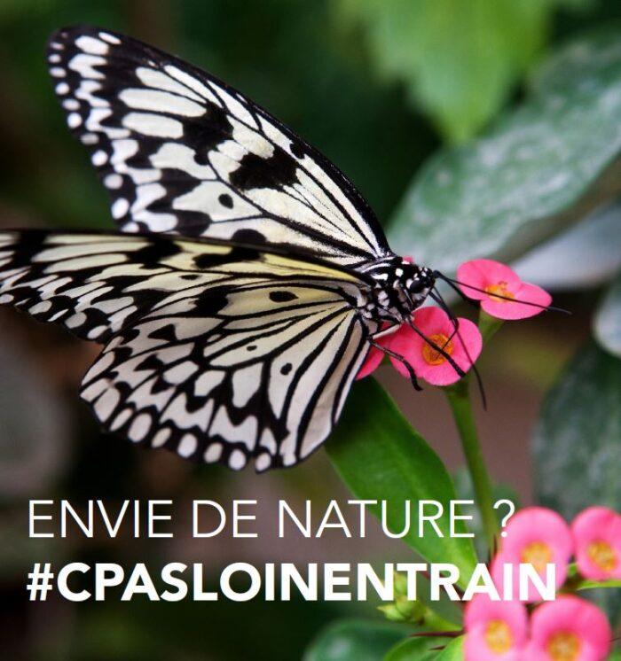 Serre aux papillons - Garancières-La Queue