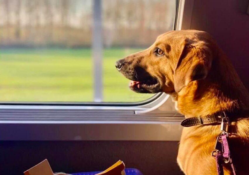 Chien en TGV - Les Anges du Rail